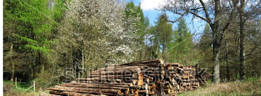 Pohon dan Batang Kayu